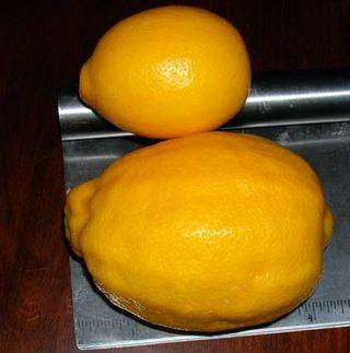 Lemons-Size