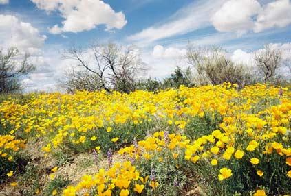 Desert-Bloom