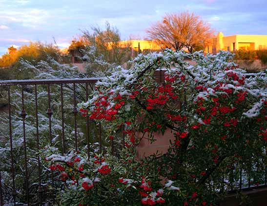 Desert-Snow-1