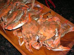 Bluecrab-Steamed